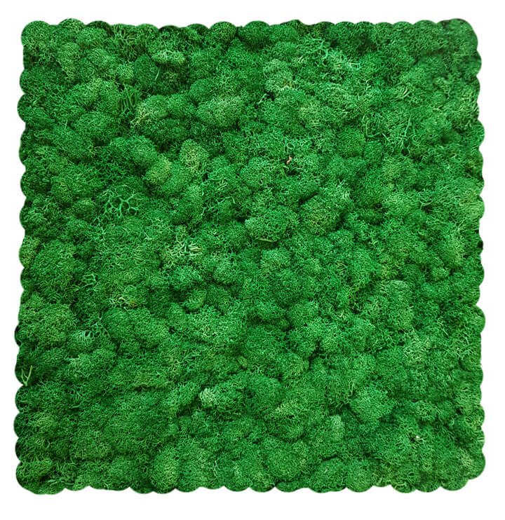 Racing Green Evergreen Moss