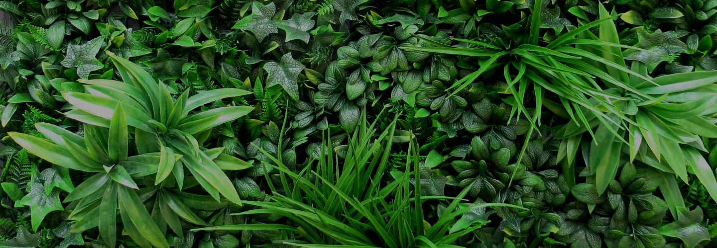 fern-mixed-1.png