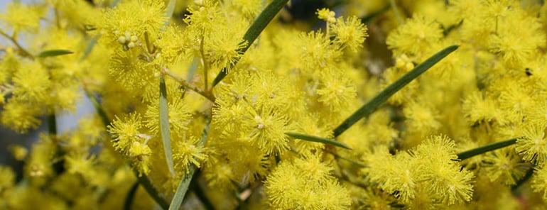 10-Plants-Aussie-Backyards-Love-INLINE-2.jpg