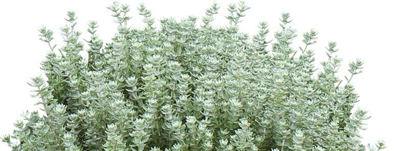10-Plants-Aussie-Backyards-Love-INLINE-3.jpg