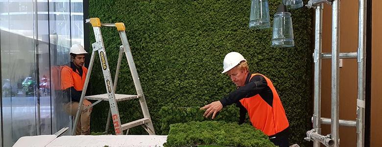 Evergreen-Moss-Inline