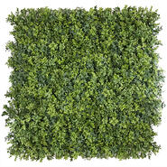 Evergreen Walls Premium Hedge