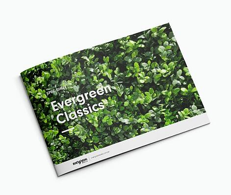 Evergreen-Classics-Brochure