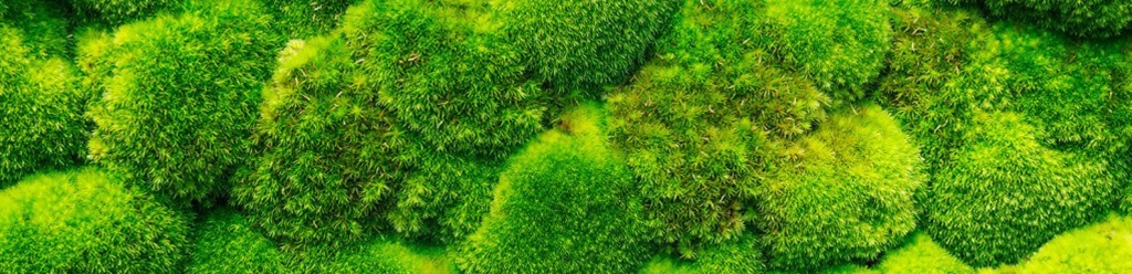Moss noise reduction