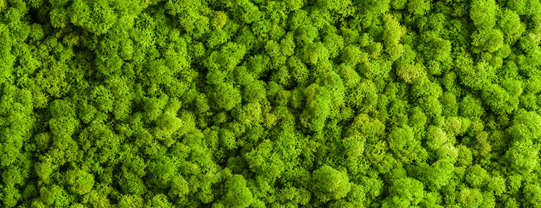 Benefits of moss walls