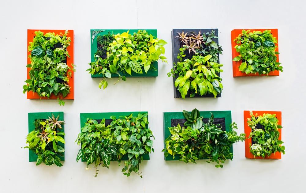 Evergreen Walls vertical garden planters