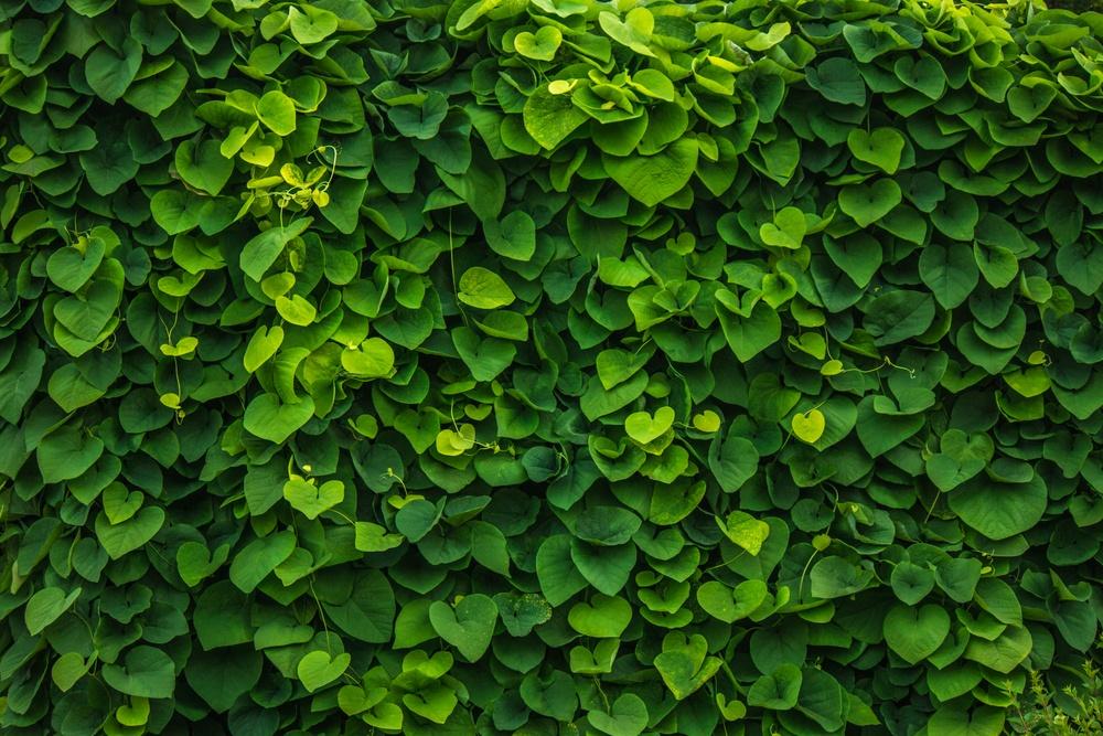 Evergreen Walls green wall plants