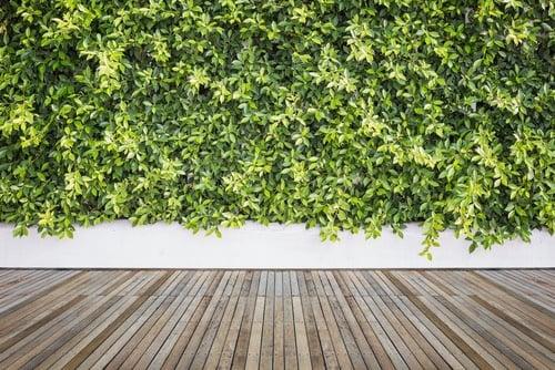 Evergreen Walls vertical gardens