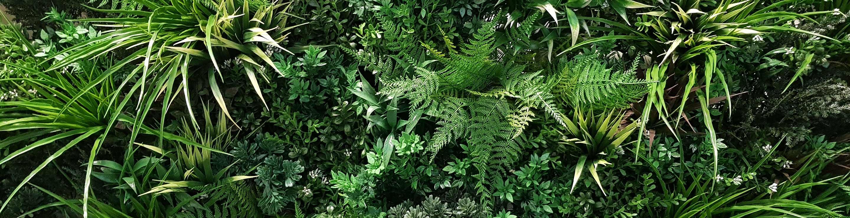 Evergreen-Banner-2.jpg