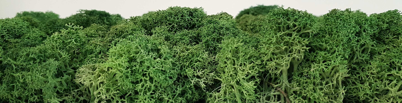 Moss-Banner-1.jpg
