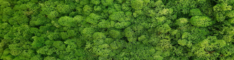 Moss-Banner-2.jpg