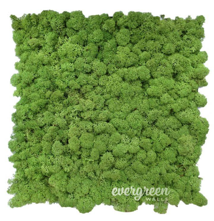 Moss2-720x742