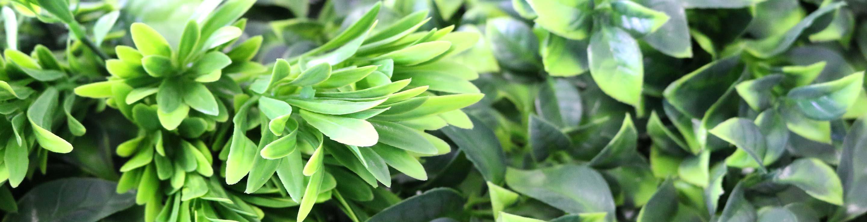 Spring-Banner-Image-2