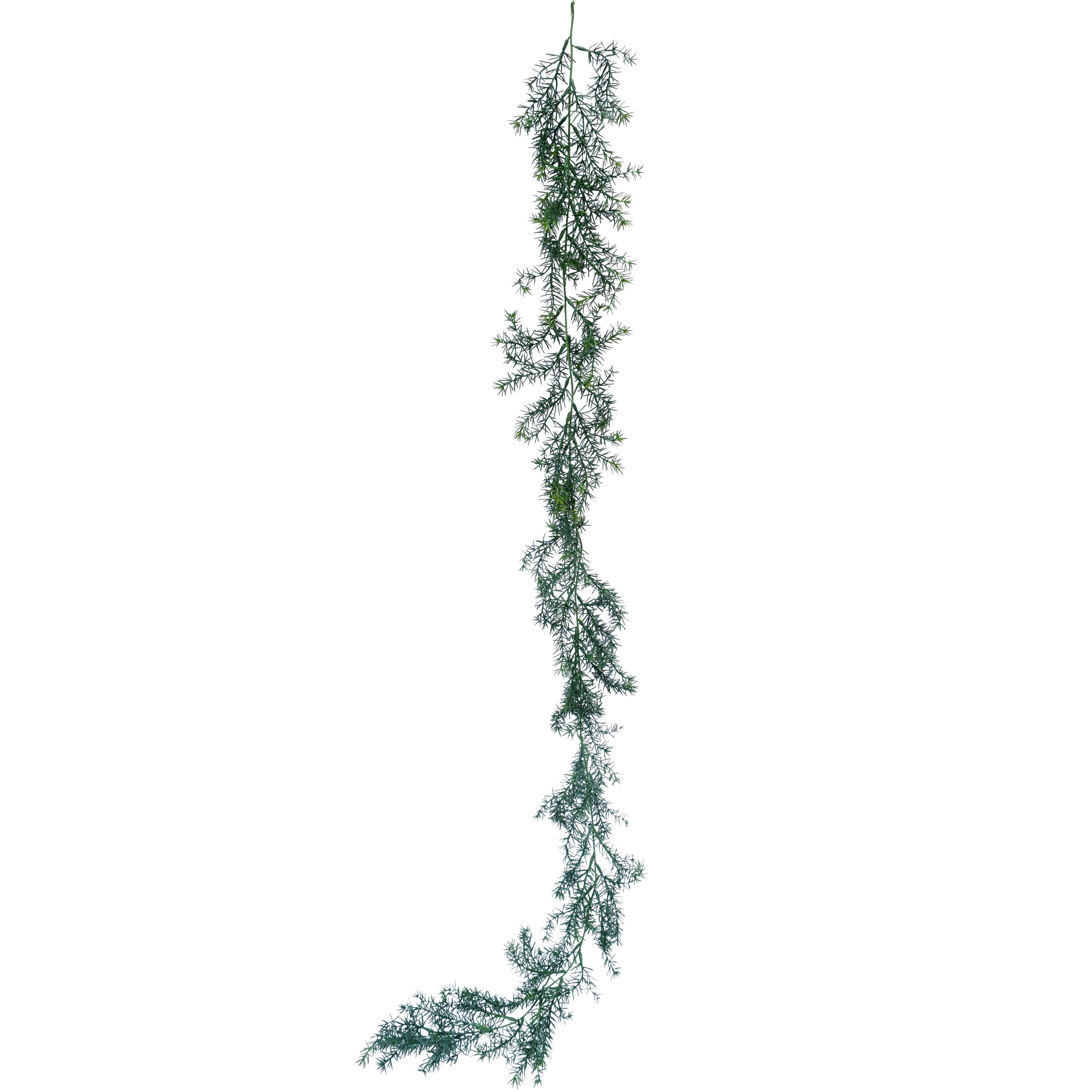 Watergrass-vine2.jpg