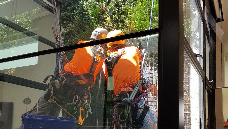 evergreen walls installation