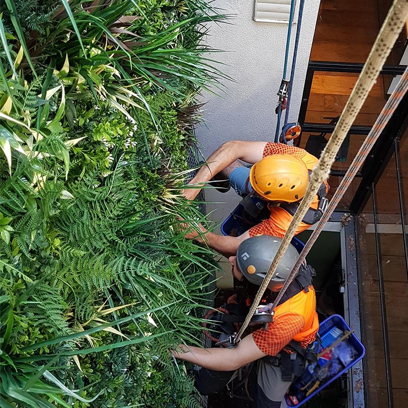 evergreenwalls installation