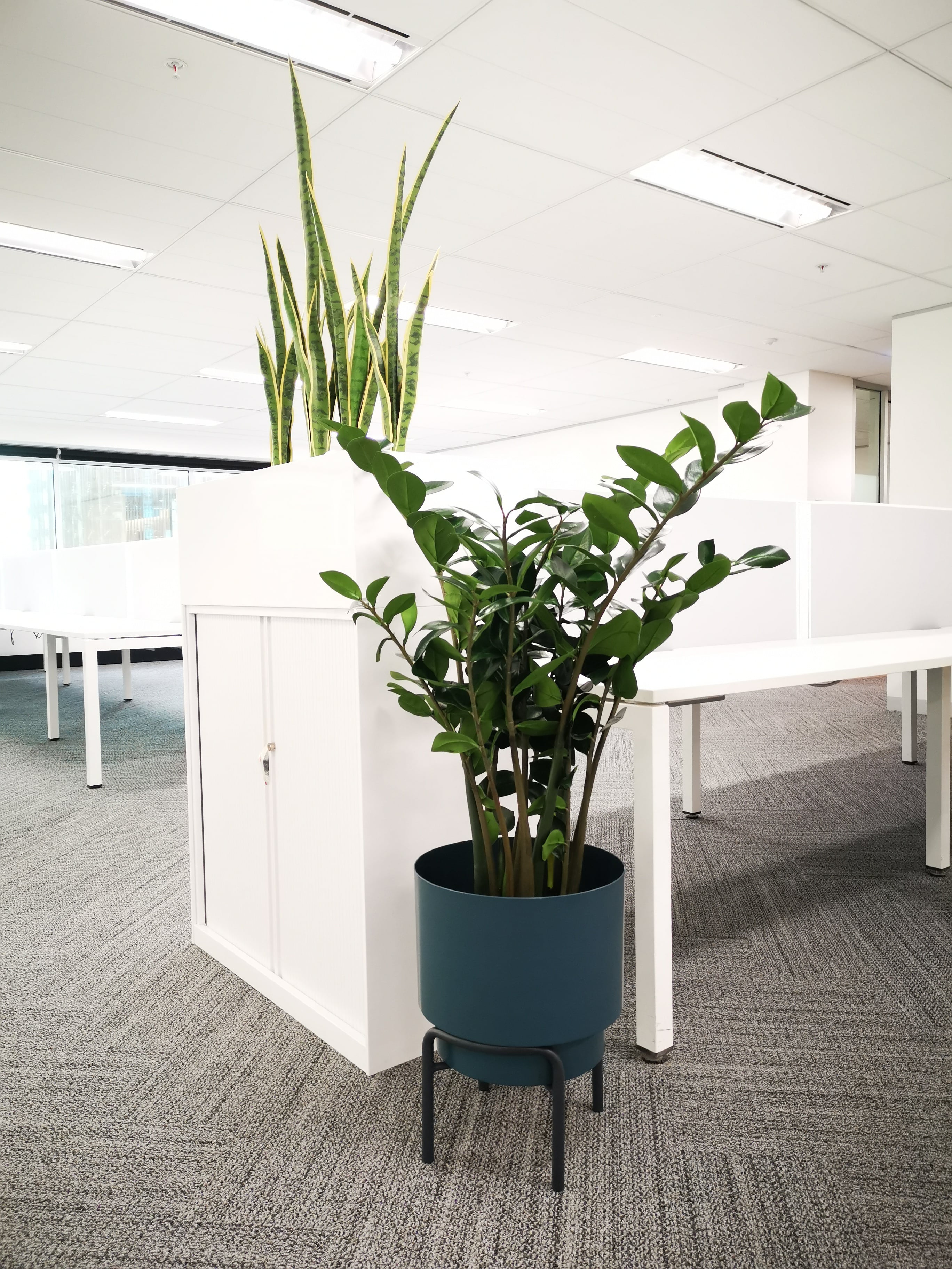 office greenery clarence-min