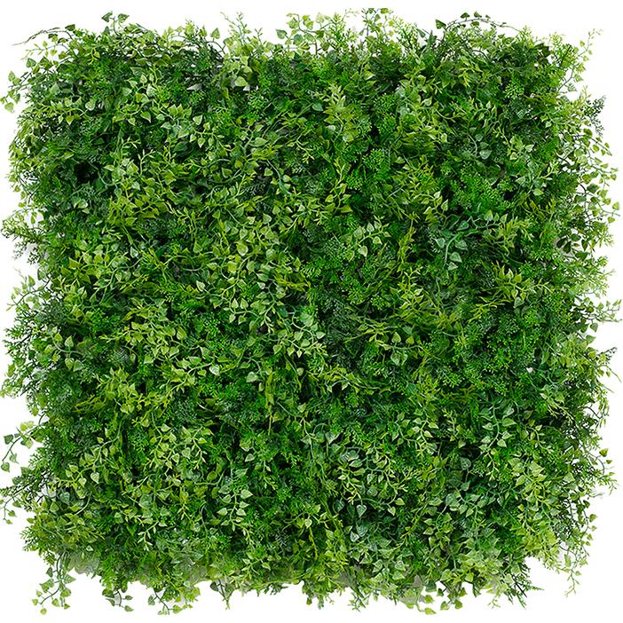 calssic ferns